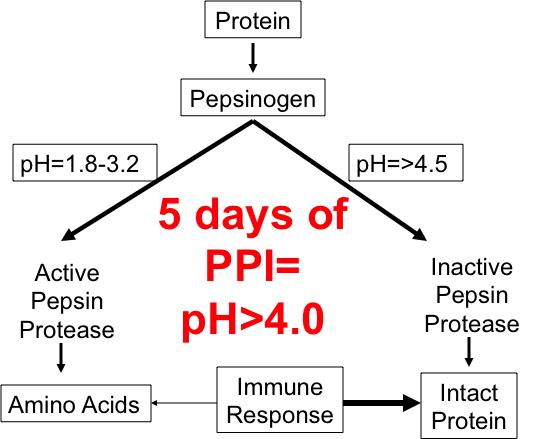 Graphic supporting document text concerning how acidic environment activates pepsinogen to create protease that helps break down proteins.